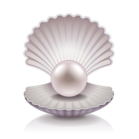 Shell with pearl isolated on white photo-realistic illustration Vector