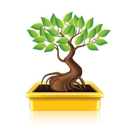 Bonsai boom op een witte foto-realistische vector illustratie Stockfoto - 27708892