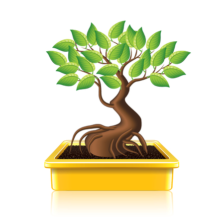 bonsai: Bonsai tree isolated on white photo-realistic vector illustration Illustration