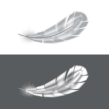 downy: Grey and white feathers isolated vector illustration Illustration