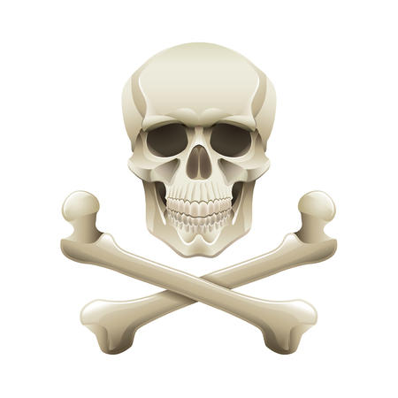 skull and crossbones: Skull and crossbones isolated on white photo-realistic vector illustration