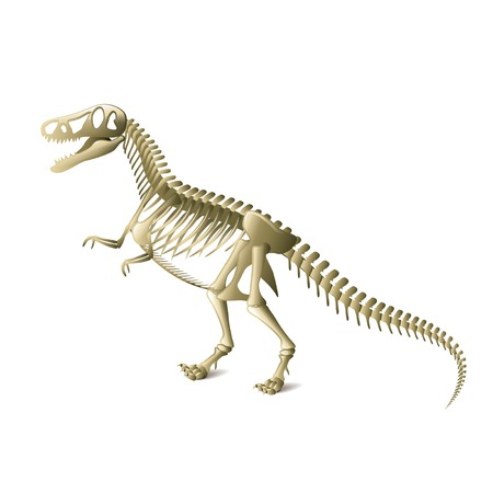 Dinosaur skeleton isolated on white photo-realistic vector illustration Vector