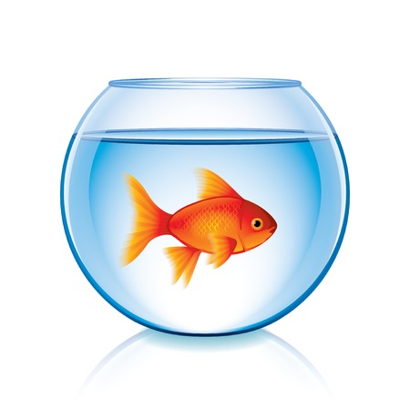 Goldfish in bowl isolated on white photo-realistic vector illustration