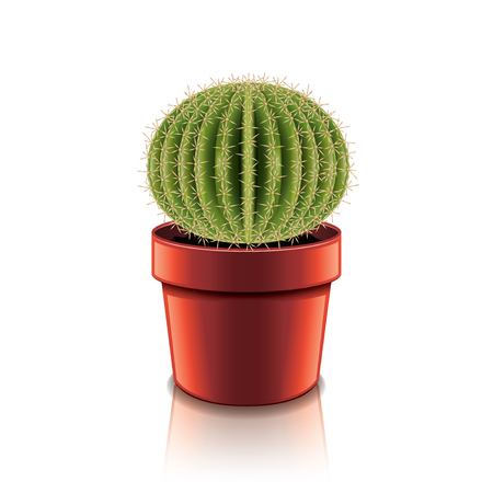 Cactus isolated on white photo-realistic vector illustration