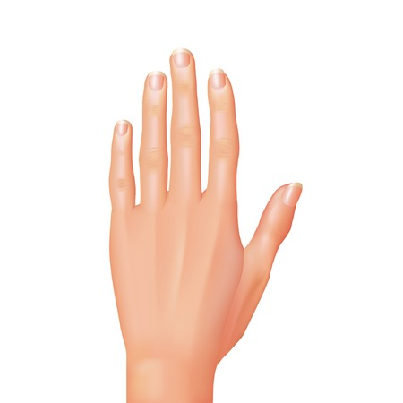 raised hand: Hand isolated on white photo-realistic vector illustration