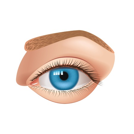 parts: Human eye isolated on white photo-realistic vector illustration
