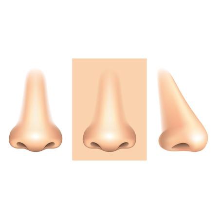 olfato: Nariz aislado en blanco fotorrealista ilustración vectorial Vectores