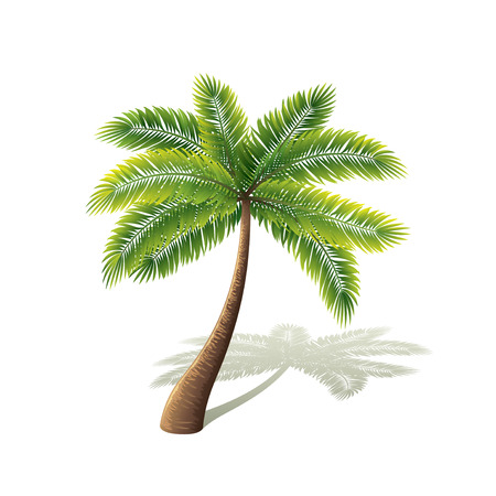 tree leaf: Palm tree isolated on white photo-realistic vector illustration