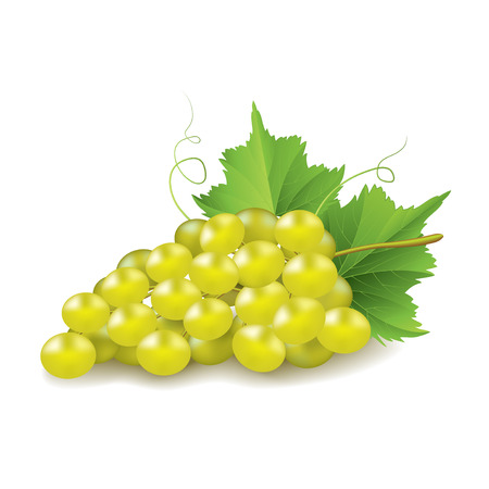 bunch of grapes: Grapes isolated on white photo-realistic vector illustration