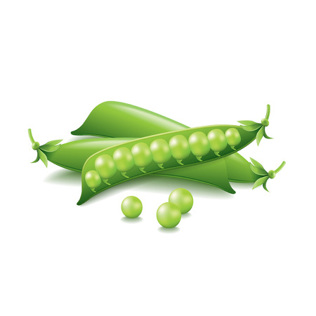 peas: Peas isolated on white photo-realistic vector illustration