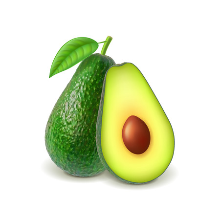 Avocado and slice isolated on white photo-realistic vector illustration Illustration
