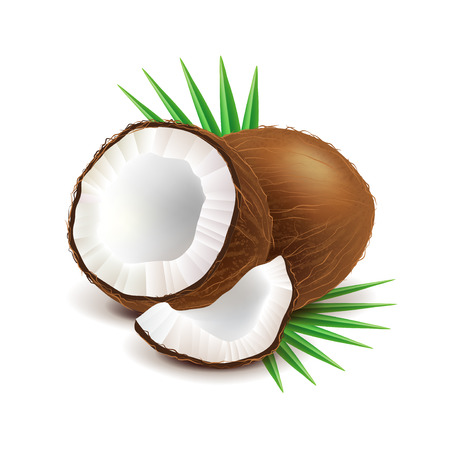 Coconut and slice isolated on white photo-realistic vector illustration