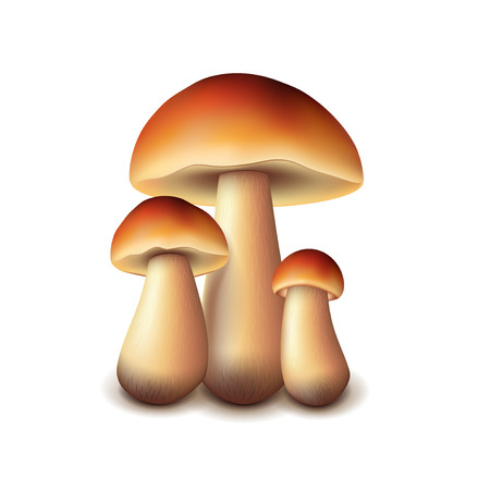 spores: Forest mushrooms isolated on white photo-realistic vector illustration