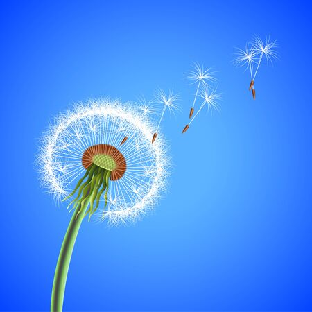 Dandelion seeds blowing away photo realistic vector background Illustration