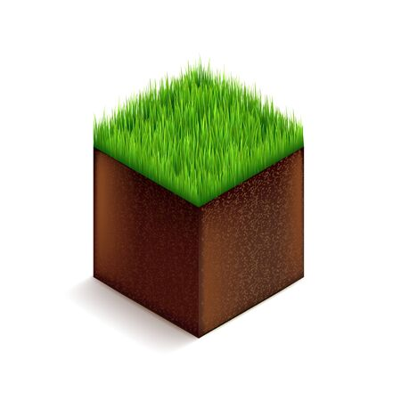 grassroots: Grass cube isolated on white photo-realistic vector illustration