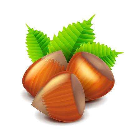 photorealistic: Hazelnuts isolated on white photo-realistic vector illustration
