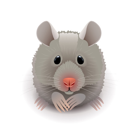 photorealistic: Hamster isolated on white photo-realistic vector illustration