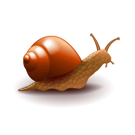 slowness: Snail isolated on white photo-realistic vector illustration