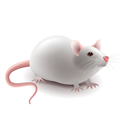 White rat isolated on white photo-realistic vector illustration Stock Illustratie