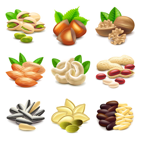 photo realistic: Nuts icons detailed photo realistic vector set