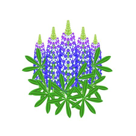 photorealistic: Lupine flowers isolated on white photo-realistic vector illustration