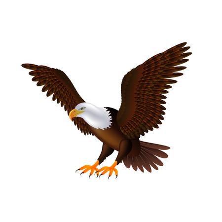 Flying eagle isolated on white photo-realistic