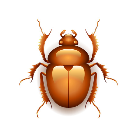 beetle: Egyptian scarab beetle isolated on white photo-realistic vector illustration