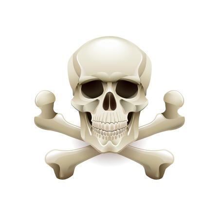 sceleton: Skull crossbones isolated on white photo-realistic illustration Illustration