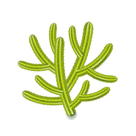 cereus: Cereus cactus isolated on white photo-realistic vector illustration