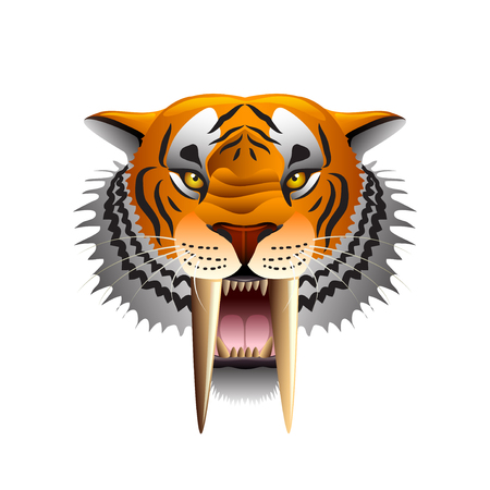 saber tooth: Saber-toothed tiger face isolated on white photo-realistic vector illustration