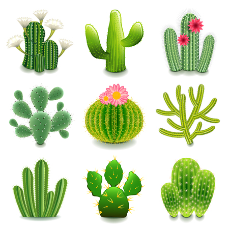 prickly pear: Cactus icons detailed photo realistic set