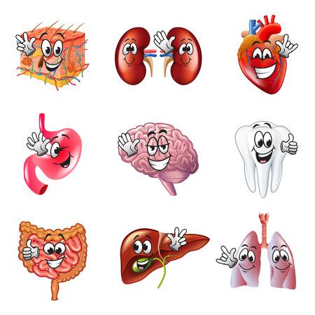 Funny cartoon human organs detailed realistic vector set Illustration