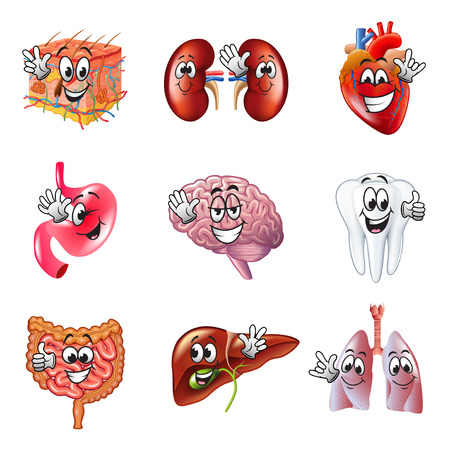 Funny cartoon human organs detailed realistic vector set Illustration