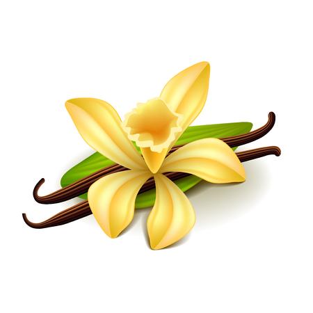 Vanilla samodzielnie na białym tle ilustracji wektorowych