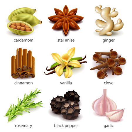 Arten und Kräuter Symbole Foto realistische Vektor-Set Vektorgrafik