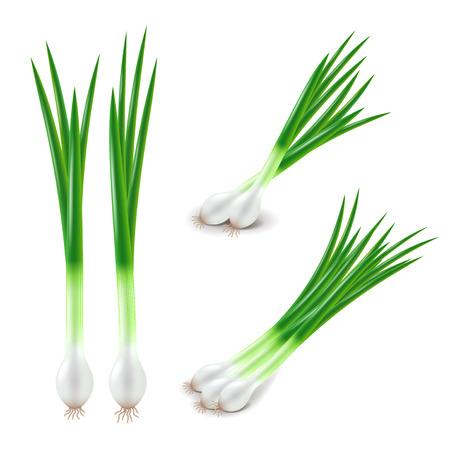 Grüne Zwiebeln auf weiße fotorealistische Vektor-Illustration Set isoliert
