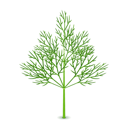 Fresh dill isolated on white photo-realistic vector illustration