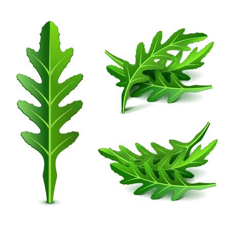 Fresh arugula set isolated photo-realistic vector illustration