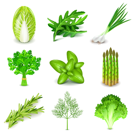 Green vegetables and spices icons detailed photo realistic vector set