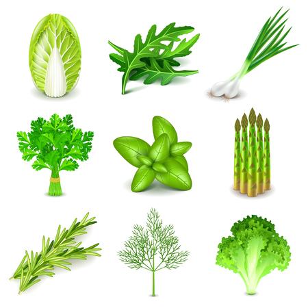 Groene groenten en kruiden iconen gedetailleerde foto realistische vector set