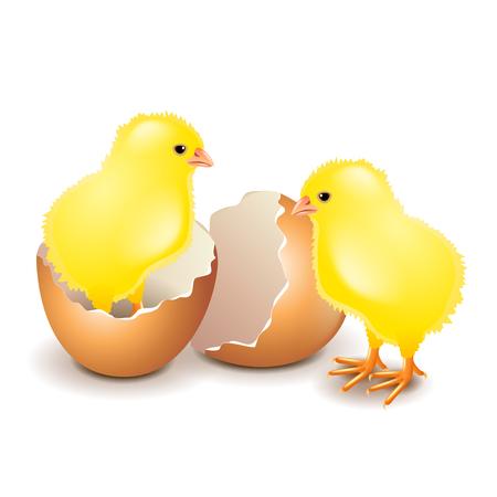 흰색 사실적인 벡터 일러스트 레이 션에서 절연 달걀에 노란 닭