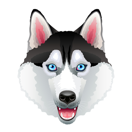 Husky dog portrait isolated on white photo-realistic vector illustration Vectores