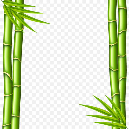 Bamboo stems isolated on white photo-realistic vector illustration Vectores