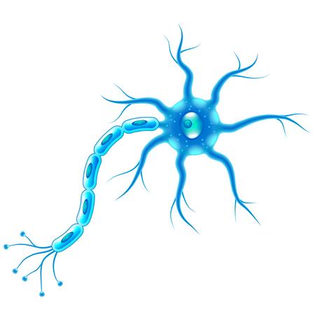 Células nerviosas aisladas en la ilustración de vector realista de foto blanca