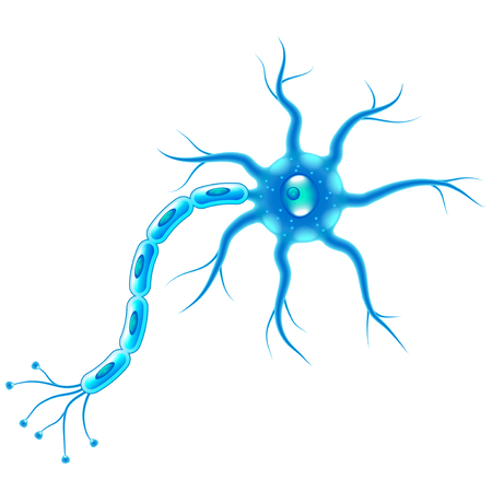 Nervenzellen isoliert auf weißer fotorealistischer Vektorillustration