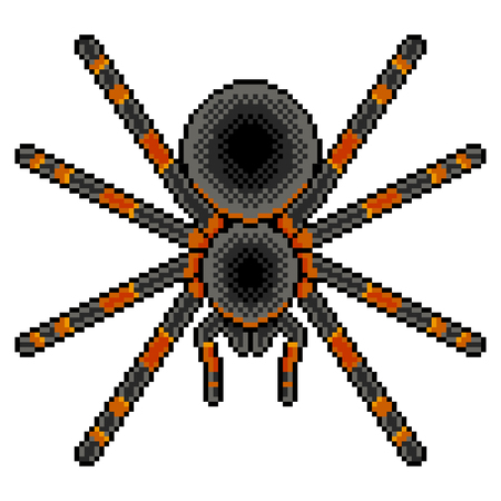 Pixel art tarantula spider detailed illustration isolated vector Illustration