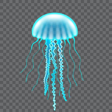 Hermosas medusas aisladas en blanco ilustración vectorial fotorrealista Ilustración de vector