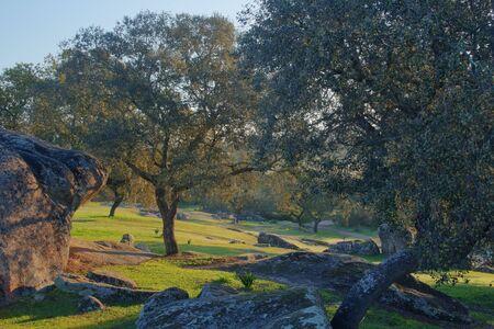 pastwisko złowione o świcie, na którym widać drzewa i skały skąpane w słońcu