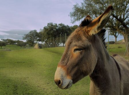 a donkey on a farm with the background field