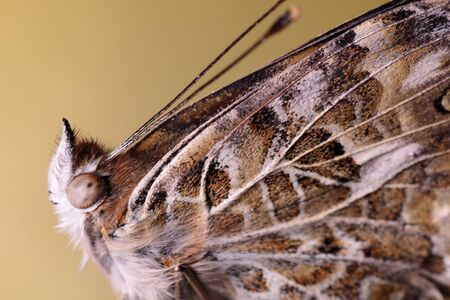 detail of a still butterfly with folded wings